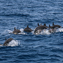 Whales & Dolphin Watching - Mirissa
